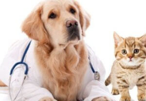huisdierenverzekering hema hond kat